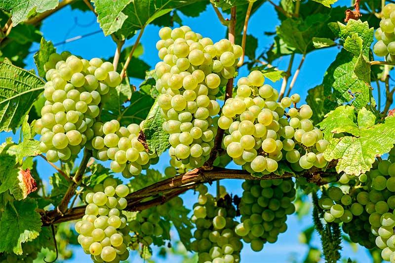 Exportaciones vino Castilla y León